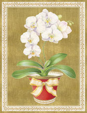 Orchid in a Pot Holiday Cards